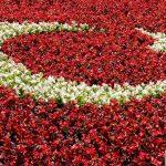 Türkiye Bayrağının Anlamı
